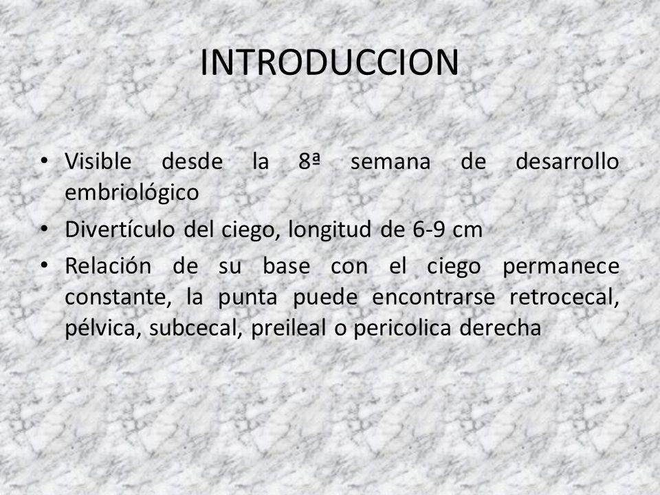 INTRODUCCION Visible desde la 8ª semana de desarrollo embriológico Divertículo del ciego, longitud de 6-9 cm Relación de su base con el ciego permanec
