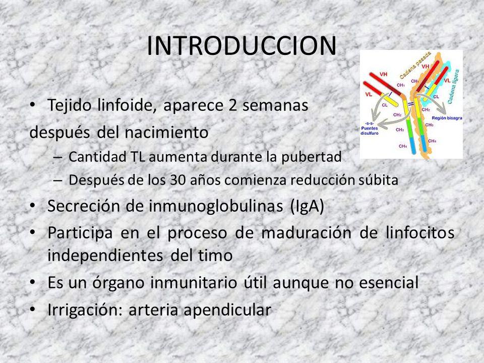 INTRODUCCION Tejido linfoide, aparece 2 semanas después del nacimiento – Cantidad TL aumenta durante la pubertad – Después de los 30 años comienza red