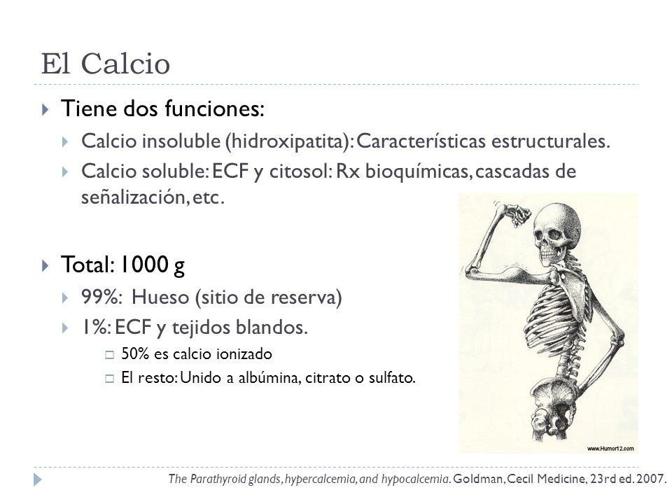 El Calcio Tiene dos funciones: Calcio insoluble (hidroxipatita): Características estructurales. Calcio soluble: ECF y citosol: Rx bioquímicas, cascada