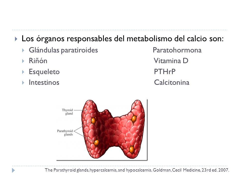 Los órganos responsables del metabolismo del calcio son: Glándulas paratiroides Paratohormona Riñón Vitamina D Esqueleto PTHrP Intestinos Calcitonina