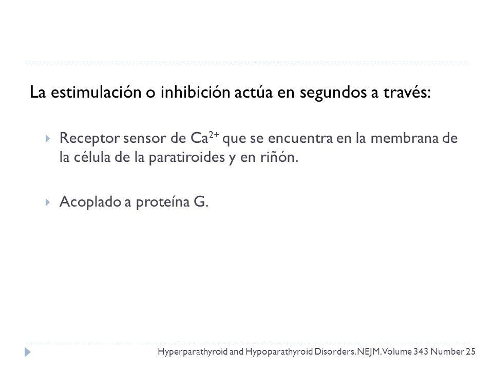 La estimulación o inhibición actúa en segundos a través: Receptor sensor de Ca 2+ que se encuentra en la membrana de la célula de la paratiroides y en