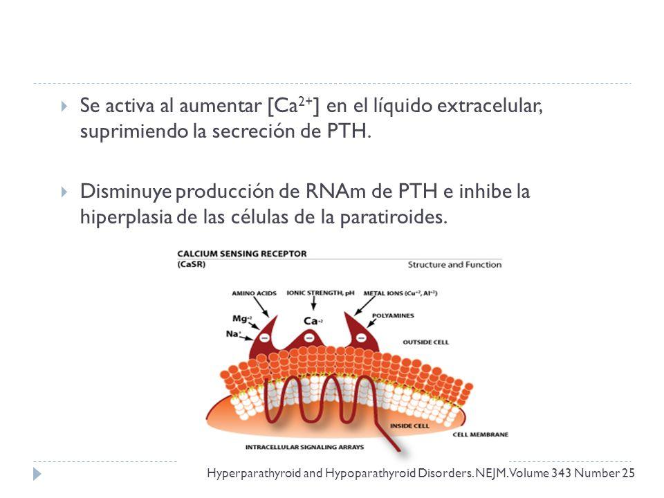 Se activa al aumentar [Ca 2+ ] en el líquido extracelular, suprimiendo la secreción de PTH. Disminuye producción de RNAm de PTH e inhibe la hiperplasi
