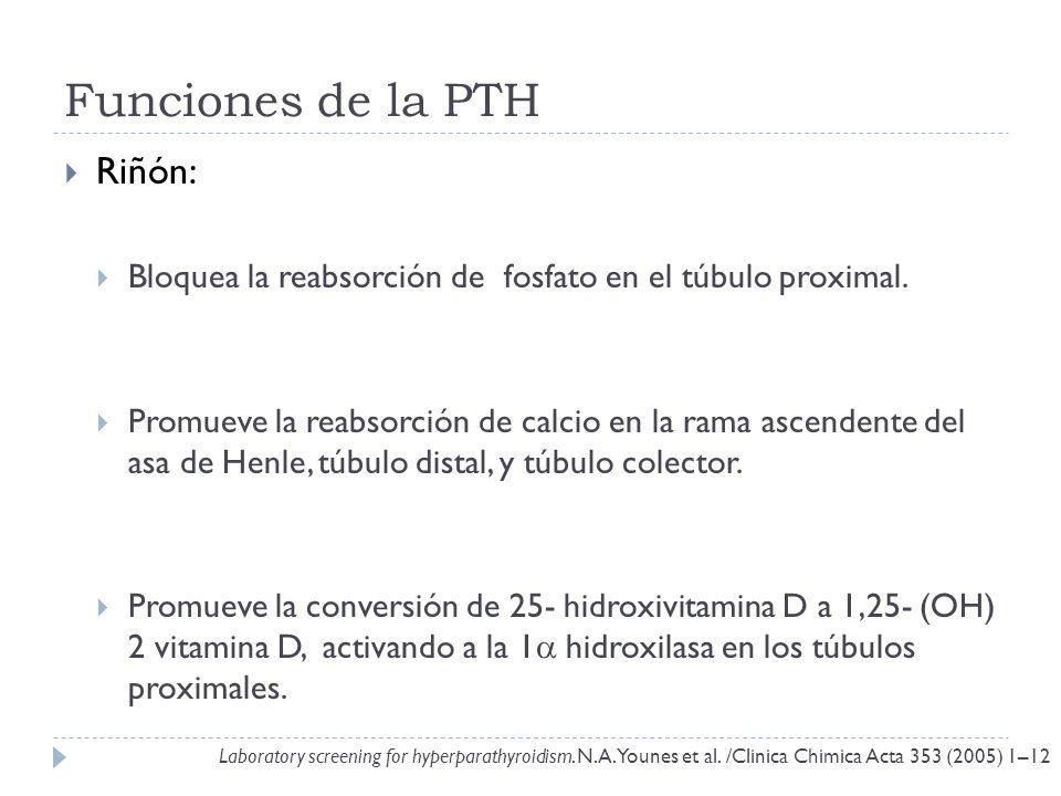 Funciones de la PTH Riñón: Bloquea la reabsorción de fosfato en el túbulo proximal. Promueve la reabsorción de calcio en la rama ascendente del asa de