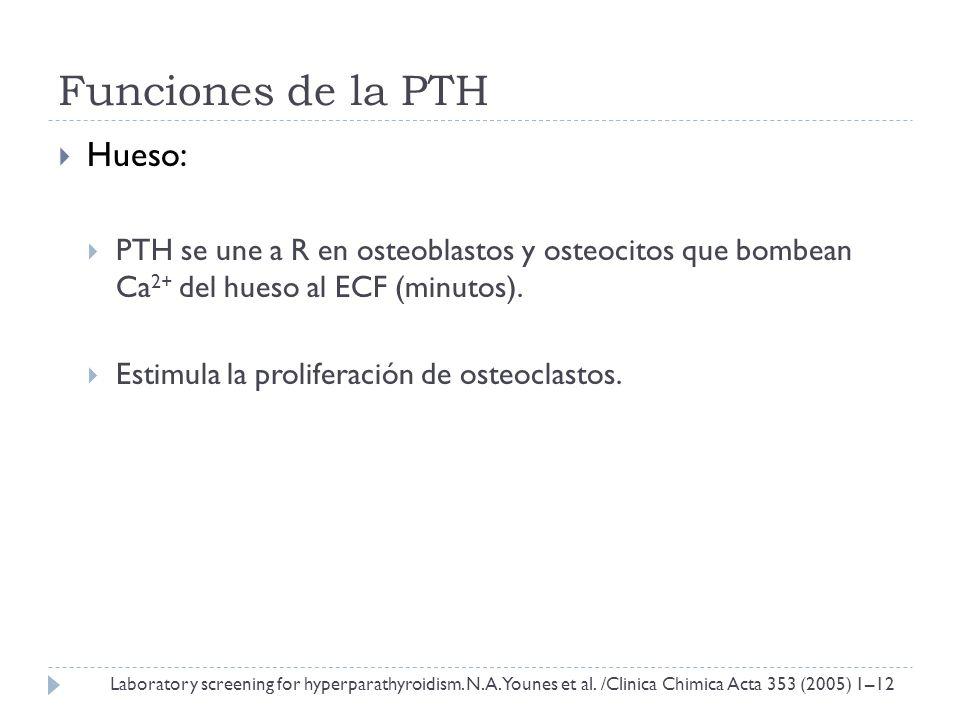 Funciones de la PTH Hueso: PTH se une a R en osteoblastos y osteocitos que bombean Ca 2+ del hueso al ECF (minutos). Estimula la proliferación de oste