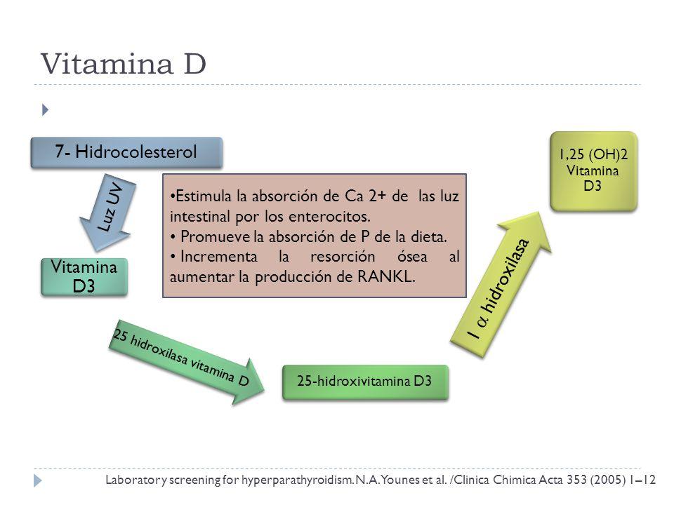 Vitamina D 7- Hidrocolesterol Luz UV Vitamina D3 25 hidroxilasa vitamina D 25-hidroxivitamina D3 1 hidroxilasa 1,25 (OH)2 Vitamina D3 Estimula la abso