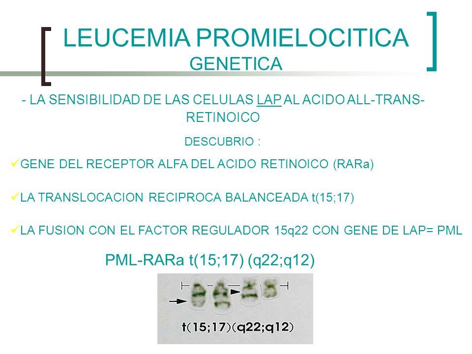 LEUCEMIA PROMIELOCITICA GENETICA - LA SENSIBILIDAD DE LAS CELULAS LAP AL ACIDO ALL-TRANS- RETINOICO DESCUBRIO : GENE DEL RECEPTOR ALFA DEL ACIDO RETIN