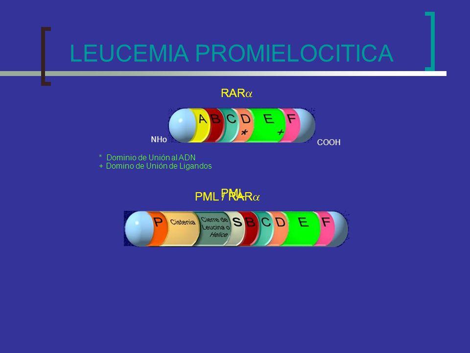 RAR * Dominio de Unión al ADN + Domino de Unión de Ligandos PML PML / RAR COOH NHo LEUCEMIA PROMIELOCITICA