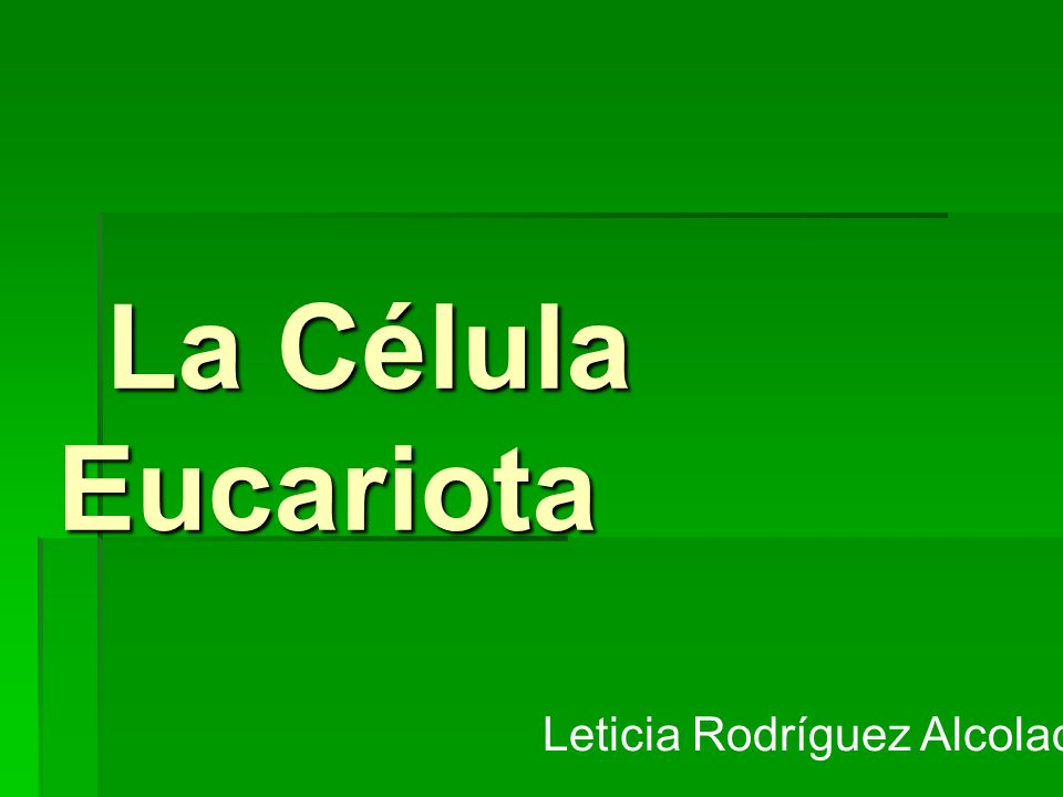 La Célula Eucariota La Célula Eucariota Leticia Rodríguez Alcolado