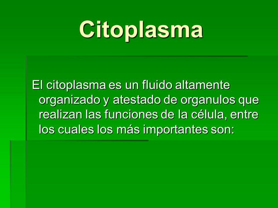 Citoplasma Citoplasma El citoplasma es un fluido altamente organizado y atestado de organulos que realizan las funciones de la célula, entre los cuale