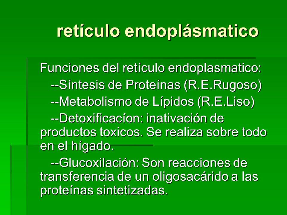 retículo endoplásmatico retículo endoplásmatico Funciones del retículo endoplasmatico: Funciones del retículo endoplasmatico: --Síntesis de Proteínas