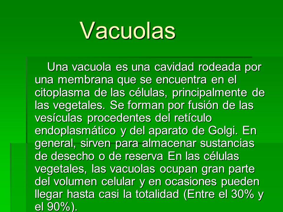 Vacuolas Vacuolas Una vacuola es una cavidad rodeada por una membrana que se encuentra en el citoplasma de las células, principalmente de las vegetale