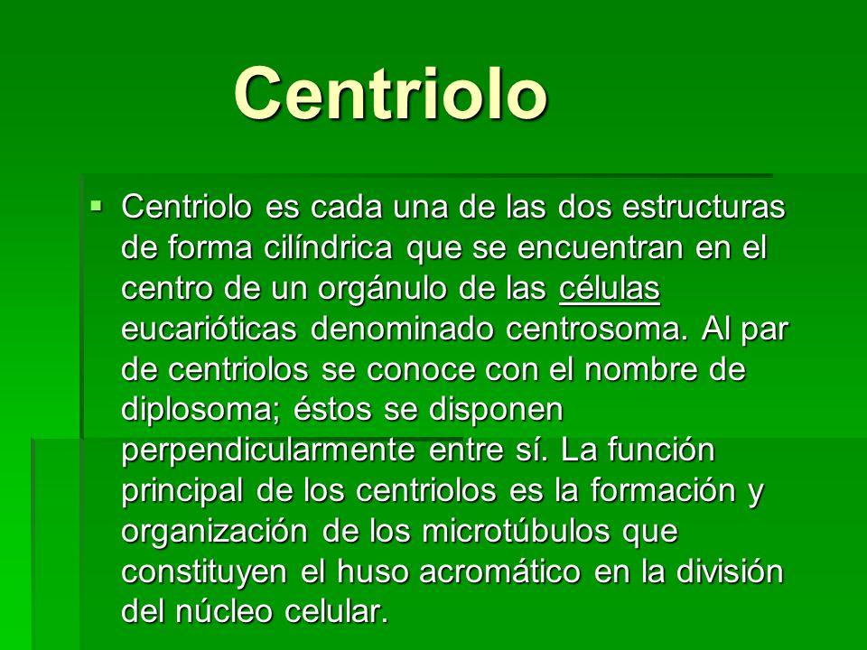 Centriolo Centriolo Centriolo es cada una de las dos estructuras de forma cilíndrica que se encuentran en el centro de un orgánulo de las células euca