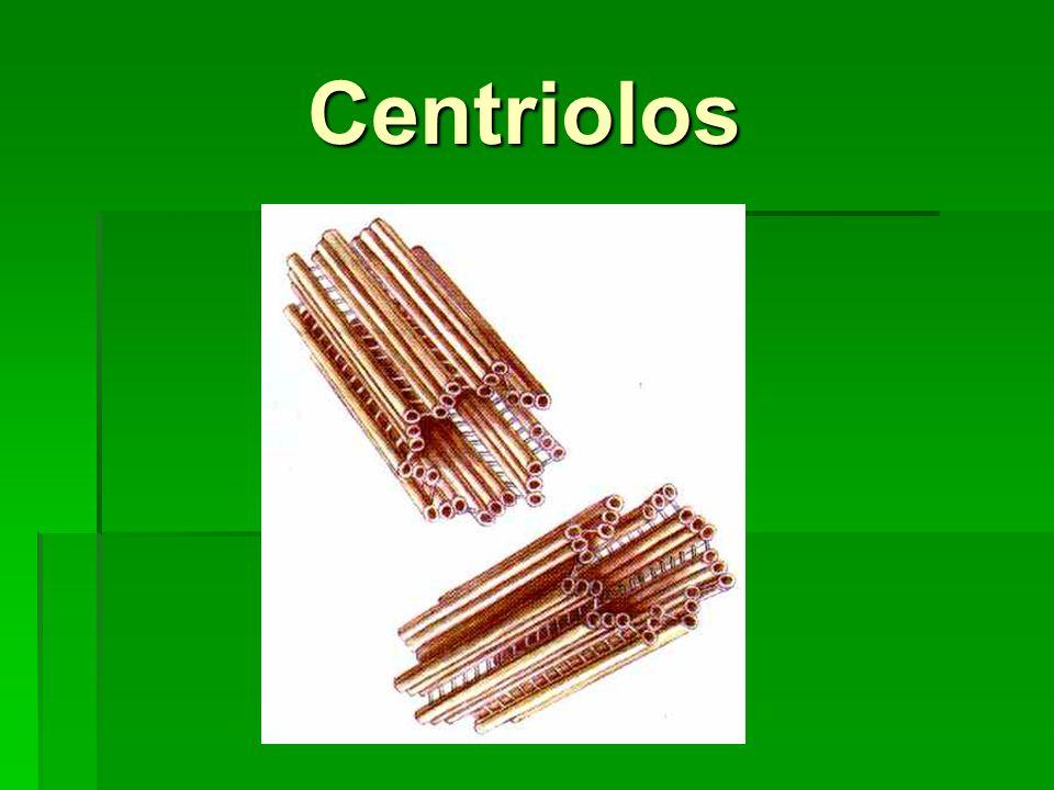 Centriolos Centriolos