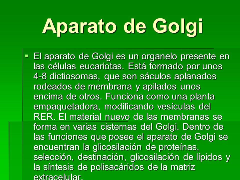 Aparato de Golgi Aparato de Golgi El aparato de Golgi es un organelo presente en las células eucariotas. Está formado por unos 4-8 dictiosomas, que so