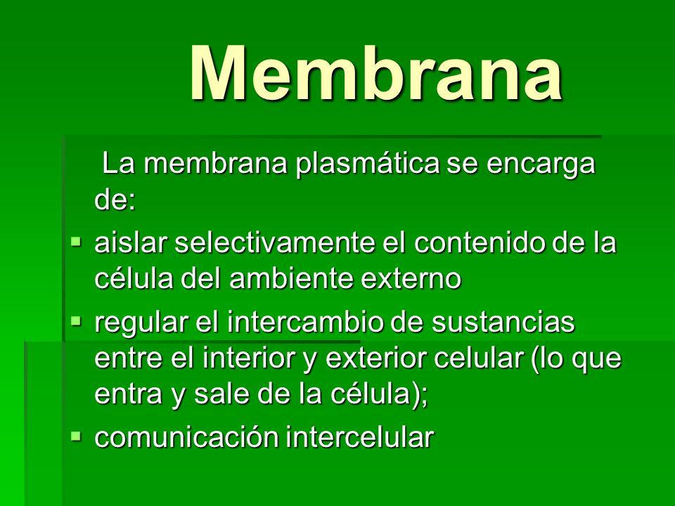 Membrana Membrana La membrana plasmática se encarga de: La membrana plasmática se encarga de: aislar selectivamente el contenido de la célula del ambi