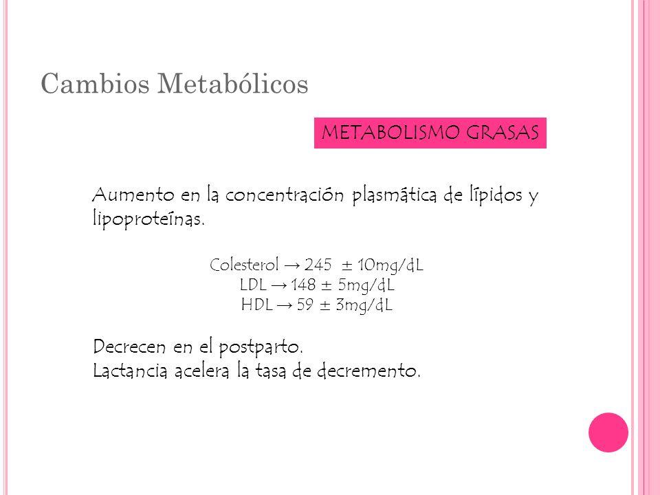 Cambios Metabólicos METABOLISMO GRASAS Aumento en la concentración plasmática de lípidos y lipoproteínas. Colesterol 245 ± 10mg/dL LDL 148 ± 5mg/dL HD
