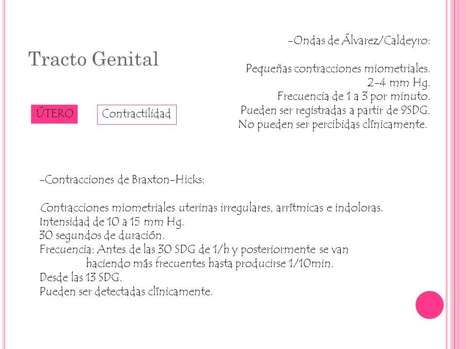 Tracto Genital ÚTERO -Ondas de Álvarez/Caldeyro: Pequeñas contracciones miometriales. 2-4 mm Hg. Frecuencia de 1 a 3 por minuto. Pueden ser registrada