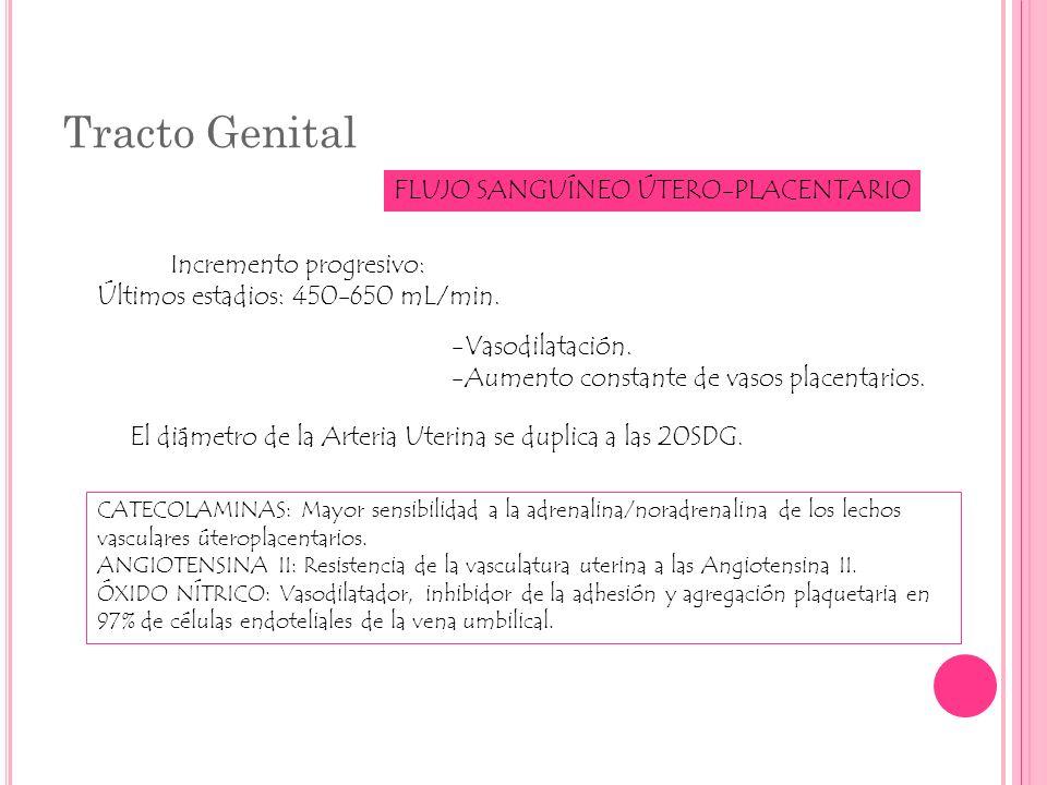 Tracto Genital FLUJO SANGUÍNEO ÚTERO-PLACENTARIO Incremento progresivo: Últimos estadios: 450-650 mL/min. -Vasodilatación. -Aumento constante de vasos