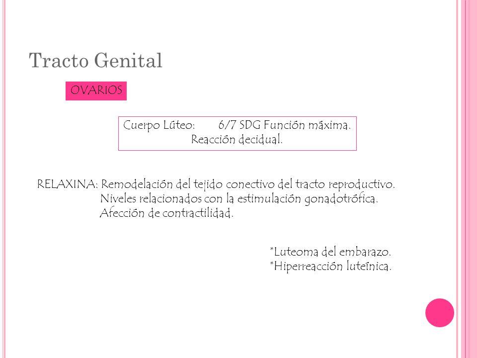 Tracto Genital OVARIOS Cuerpo Lúteo:6/7 SDG Función máxima. Reacción decidual. RELAXINA: Remodelación del tejido conectivo del tracto reproductivo. Ni