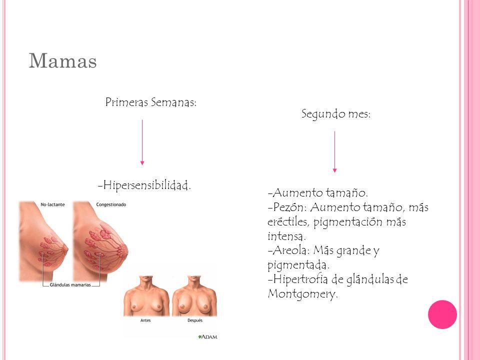 Cambios Metabólicos METABOLISMO MINERAL -Aumento de requerimientos de Hierro.