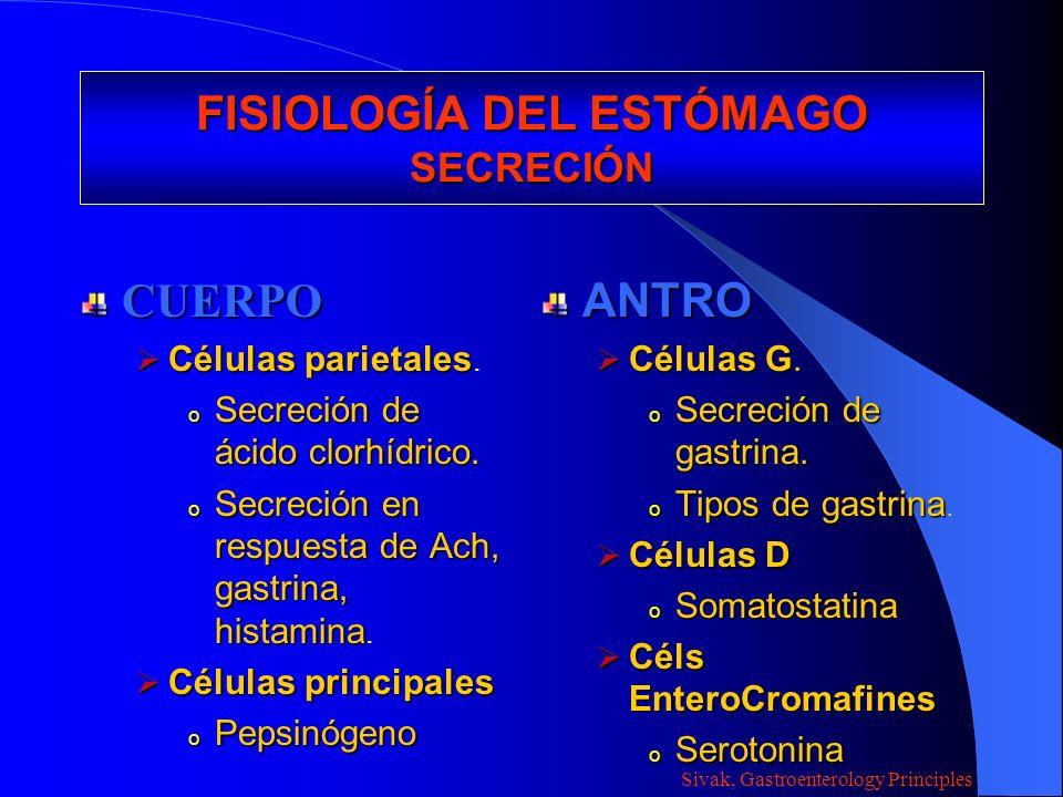 FISIOLOGÍA DEL ESTÓMAGO SECRECIÓN CUERPO Células parietales Células parietales. o Secreción de ácido clorhídrico. o Secreción en respuesta de Ach, gas