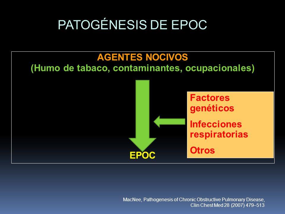 AGENTES NOCIVOS (Humo de tabaco, contaminantes, ocupacionales) EPOC PATOGÉNESIS DE EPOC Factores genéticos Infecciones respiratorias Otros MacNee, Pat