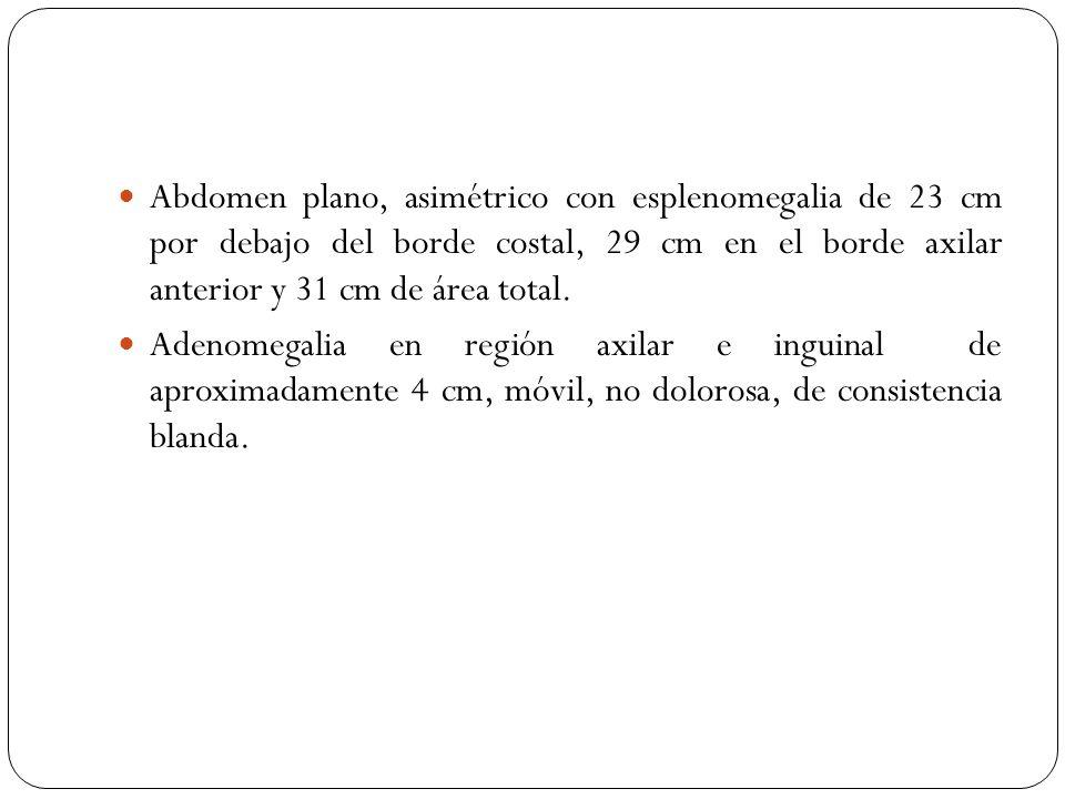 Abdomen plano, asimétrico con esplenomegalia de 23 cm por debajo del borde costal, 29 cm en el borde axilar anterior y 31 cm de área total. Adenomegal