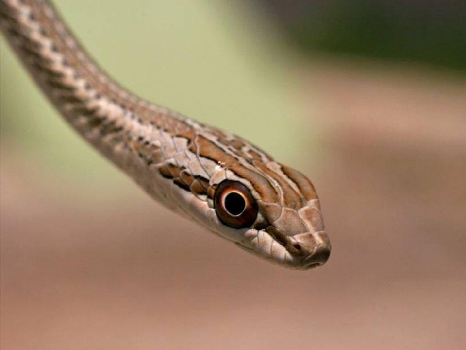 Ahora que te rodean las serpientes y los alacranes de la envidia...