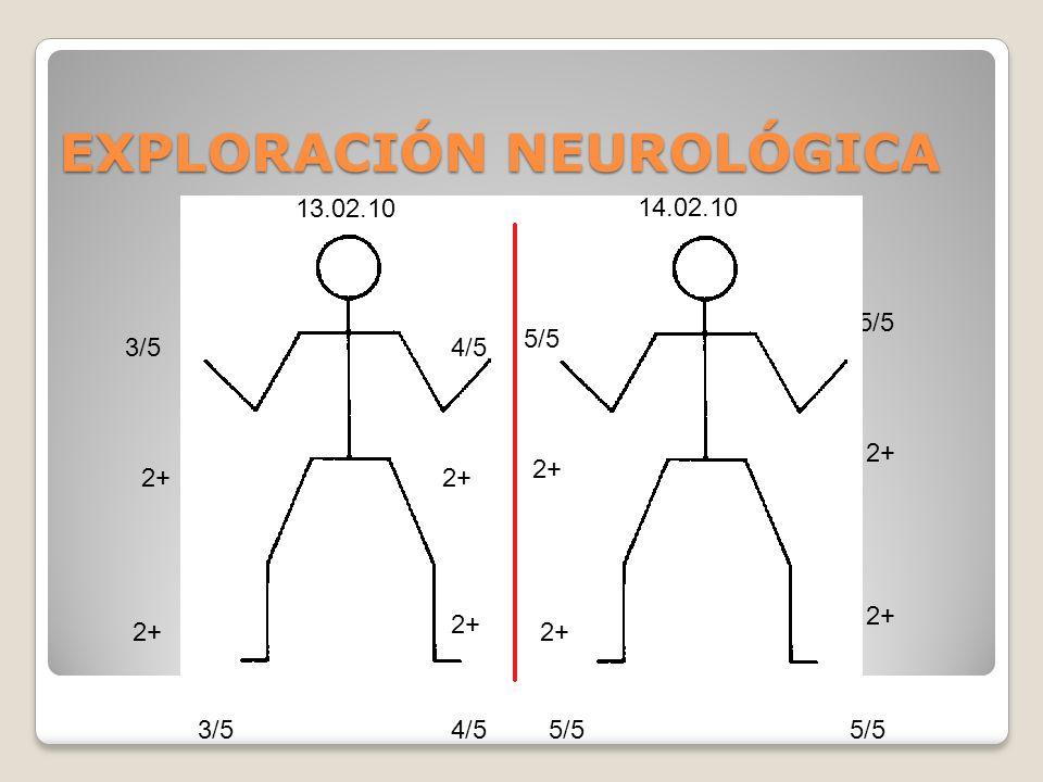 EXPLORACIÓN NEUROLÓGICA 5/5 3/5 2+ 4/5 2+ 5/5 2+ 13.02.10 14.02.10