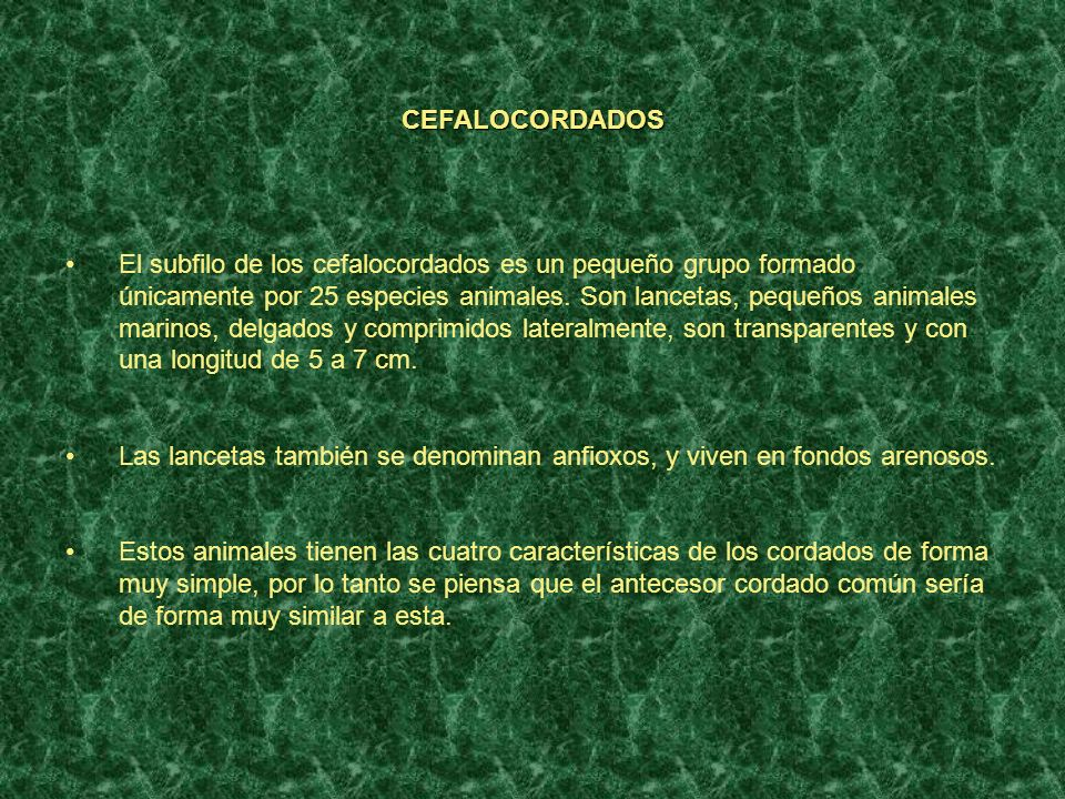 CLASIFICACIÓN INVERTEBRADOS CLASESSUBCLASES PORIFEROS CELENTERADOS GUSANOSANÉLIDOS PLATELMINTOS NEMALTELMINTOS MOLUSCOS EQUINODERMOS ARTHROPODOSINSECTOS ARÁCNIDOS CRÚSTACEOS MIRRIAPODOS VERTEBRADOS PECESÓSEOS CARTILAGINOSOS ANFIBIOS RÉPTILES AVES MAMÍFEROSCARNÍVOROS HERVÍBOROS VOLADRORES ACUÁTICOS PRIMATES