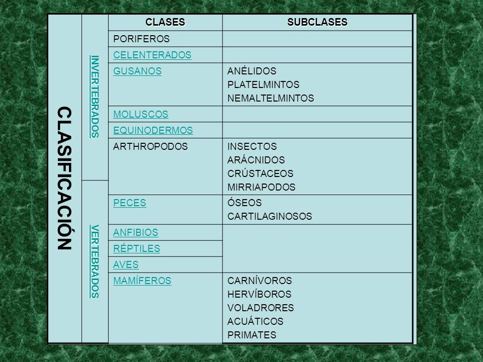 CLASIFICACIÓN INVERTEBRADOS CLASESSUBCLASES PORIFEROS CELENTERADOS GUSANOSANÉLIDOS PLATELMINTOS NEMALTELMINTOS MOLUSCOS EQUINODERMOS ARTHROPODOSINSECT