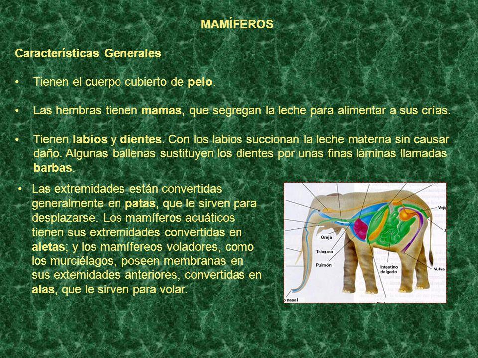 GUSANOS Características Generales Los gusanos tienen el cuerpo alargado, blando y cilíndrico.