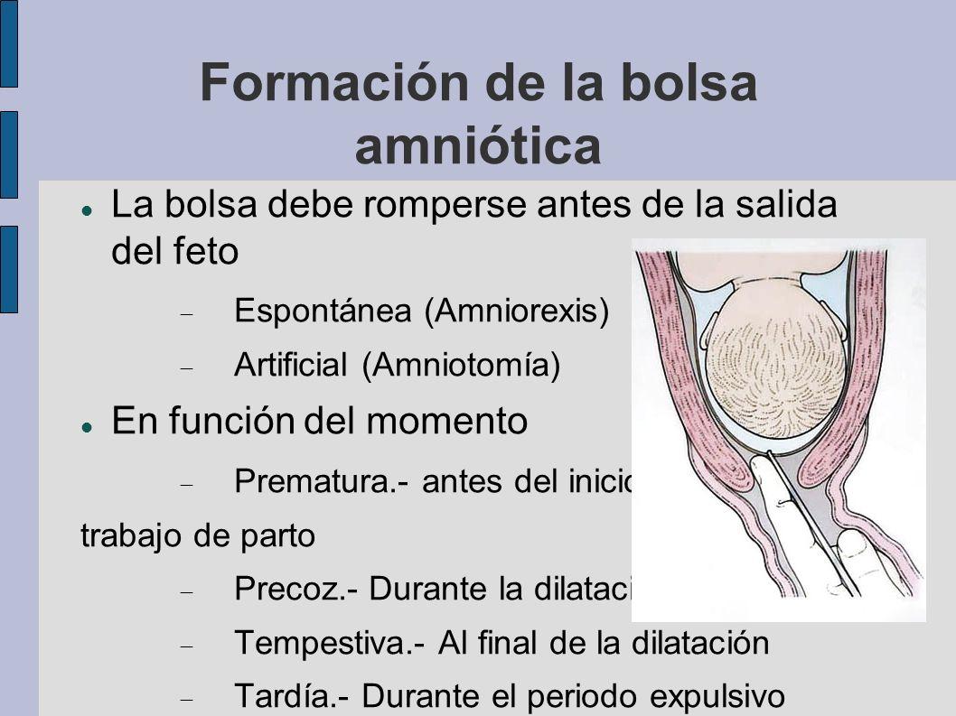 Formación de la bolsa amniótica La bolsa debe romperse antes de la salida del feto Espontánea (Amniorexis) Artificial (Amniotomía) En función del mome