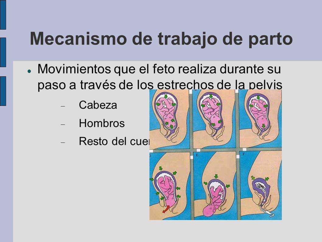 Movimientos que el feto realiza durante su paso a través de los estrechos de la pelvis Cabeza Hombros Resto del cuerpo