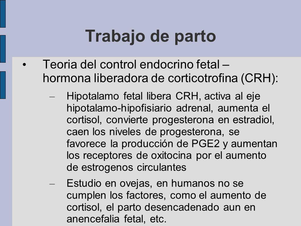 Trabajo de parto Teoria del control endocrino fetal – hormona liberadora de corticotrofina (CRH): – Hipotalamo fetal libera CRH, activa al eje hipotal