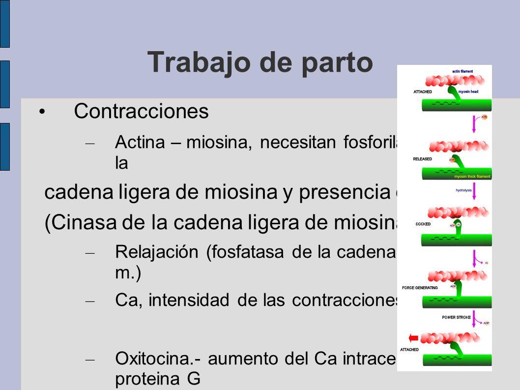 Trabajo de parto Contracciones – Actina – miosina, necesitan fosforilación de la cadena ligera de miosina y presencia de Ca. (Cinasa de la cadena lige