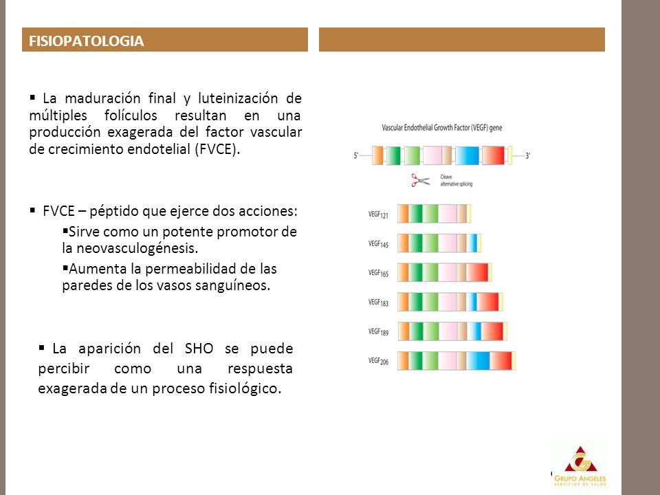 FISIOPATOLOGIA La maduración final y luteinización de múltiples folículos resultan en una producción exagerada del factor vascular de crecimiento endo