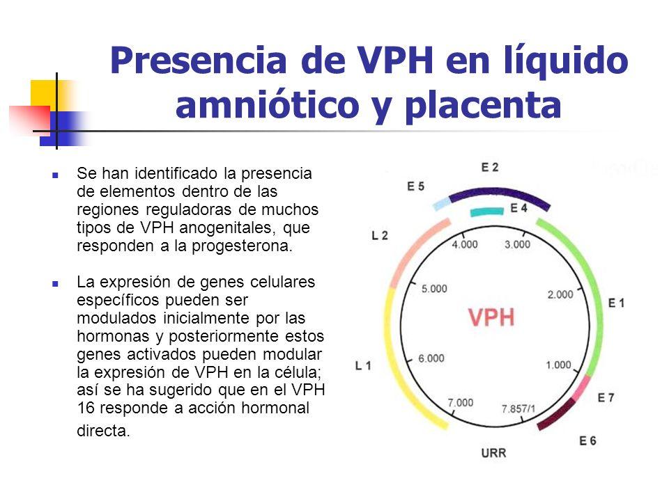 Presencia de VPH en líquido amniótico y placenta Se han identificado la presencia de elementos dentro de las regiones reguladoras de muchos tipos de V
