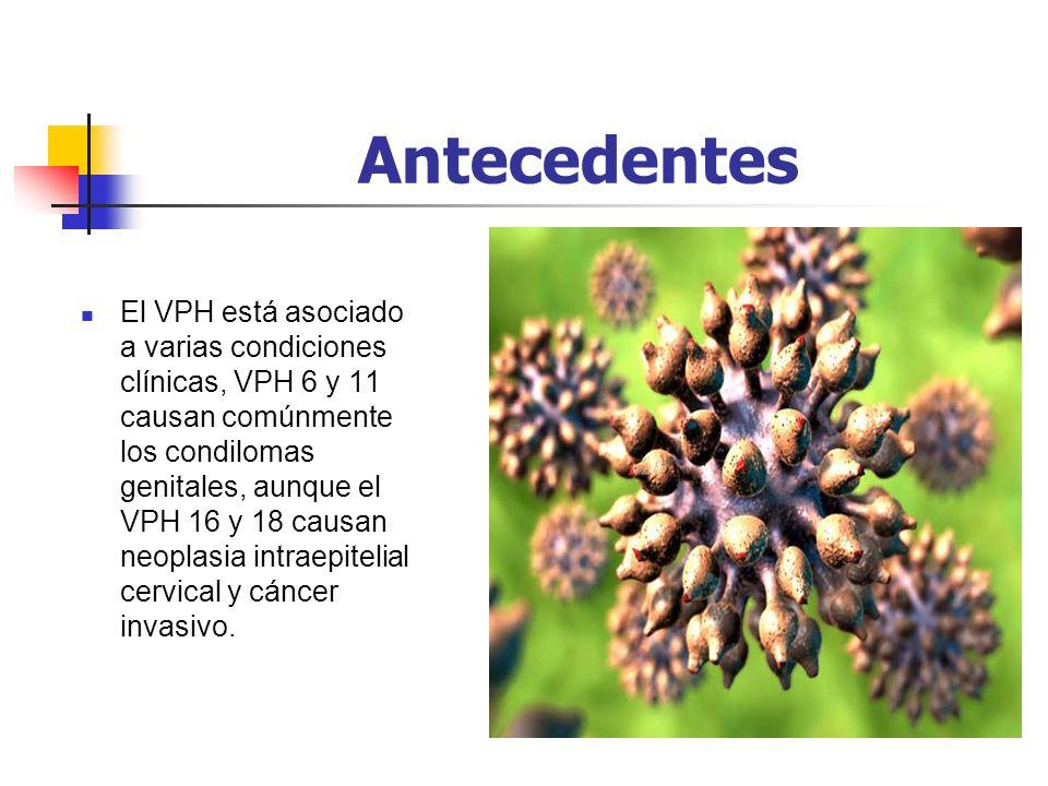Antecedentes El VPH está asociado a varias condiciones clínicas, VPH 6 y 11 causan comúnmente los condilomas genitales, aunque el VPH 16 y 18 causan n