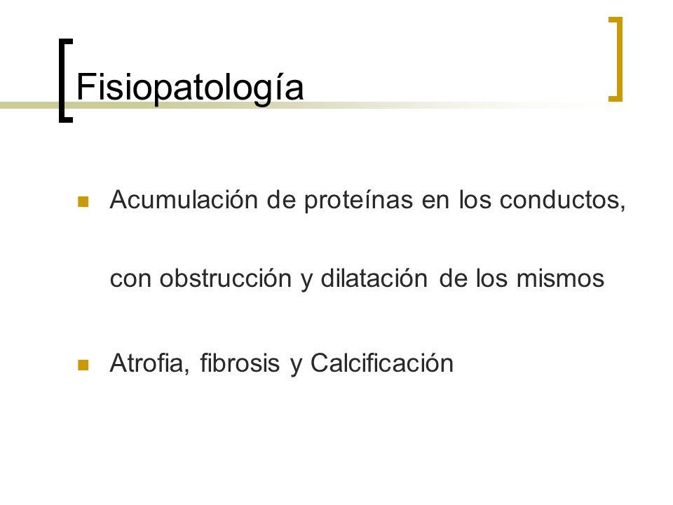 Fisiopatología Acumulación de proteínas en los conductos, con obstrucción y dilatación de los mismos Atrofia, fibrosis y Calcificación