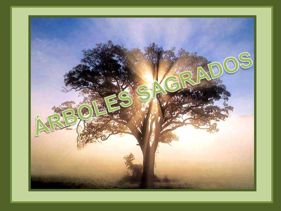 El Tejo (Texu) es árbol sagrado de los astures, por excelencia, el árbol sagrado de la mitología asturiana, pues representa el vínculo del pueblo asturiano con la tierra, con la religión antigua, con los antepasados.