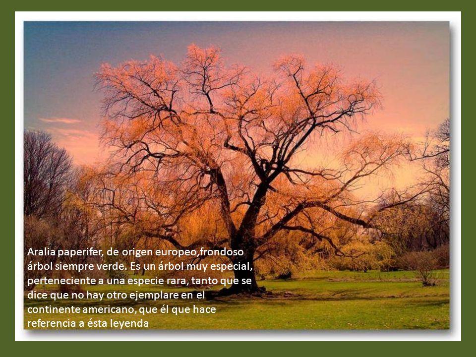 El Tejo (Texu) es árbol sagrado de los astures, por excelencia, el árbol sagrado de la mitología asturiana, pues representa el vínculo del pueblo astu