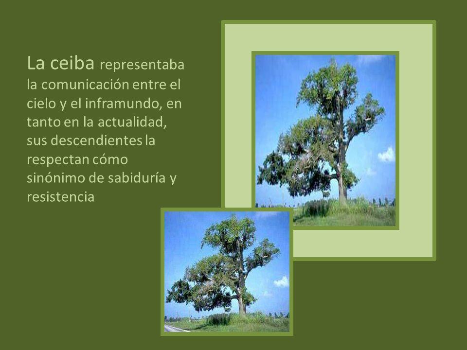 Los warao lo consideran el árbol de la vida ya qué proporciona alimento y materiales para muchas de sus actividades. Del moriche se obtiene la fibra p
