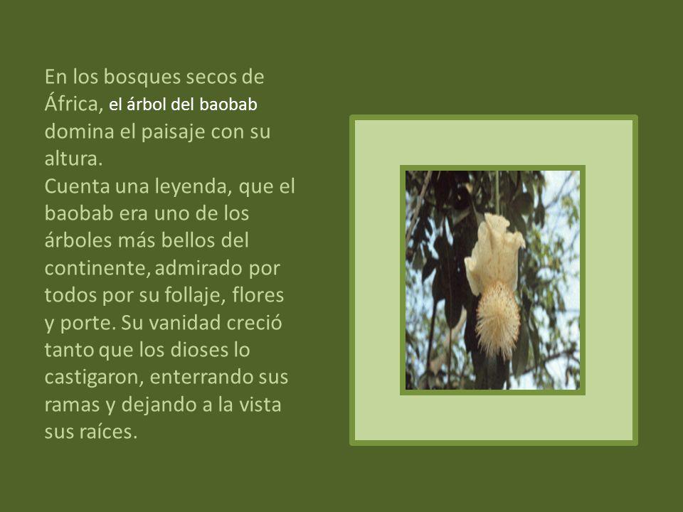 Andaba en busca de agua una muchacha del pueblo de los nivakle, cuando se encontró con un árbol fornido, Nasuk, el guayacán, y se sintió llamada. Se a
