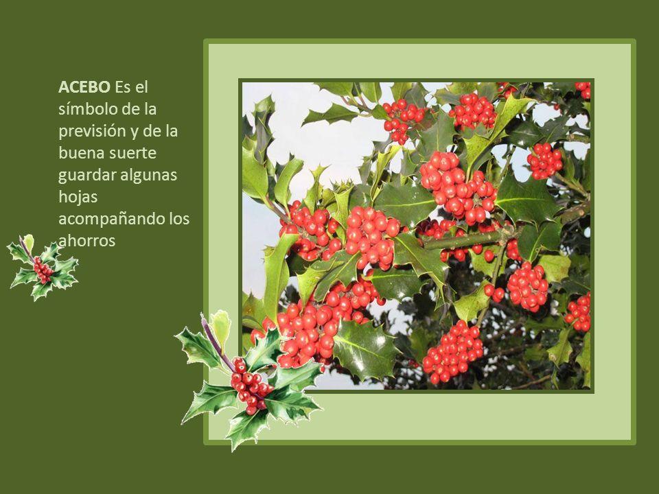 ACEBO Es el símbolo de la previsión y de la buena suerte guardar algunas hojas acompañando los ahorros