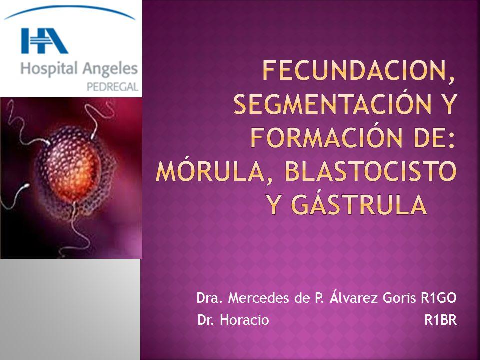 Fusión del gameto masculino con el femenino, en la ampolla de la trompa uterina, para formar un cigoto, el cual constituye un nuevo individuo.