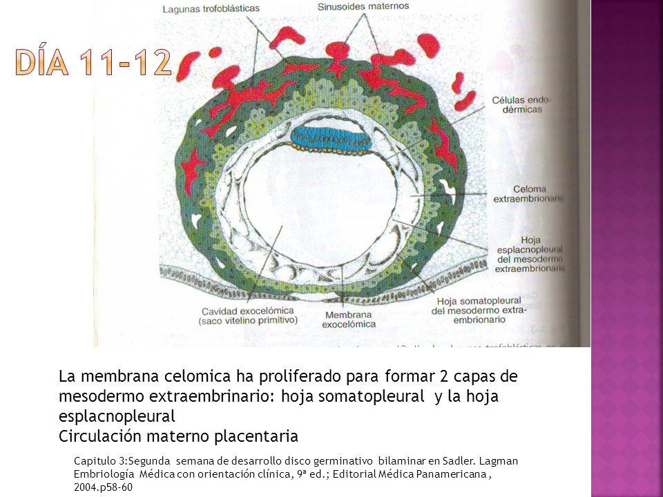 La membrana celomica ha proliferado para formar 2 capas de mesodermo extraembrinario: hoja somatopleural y la hoja esplacnopleural Circulación materno placentaria Capitulo 3:Segunda semana de desarrollo disco germinativo bilaminar en Sadler.
