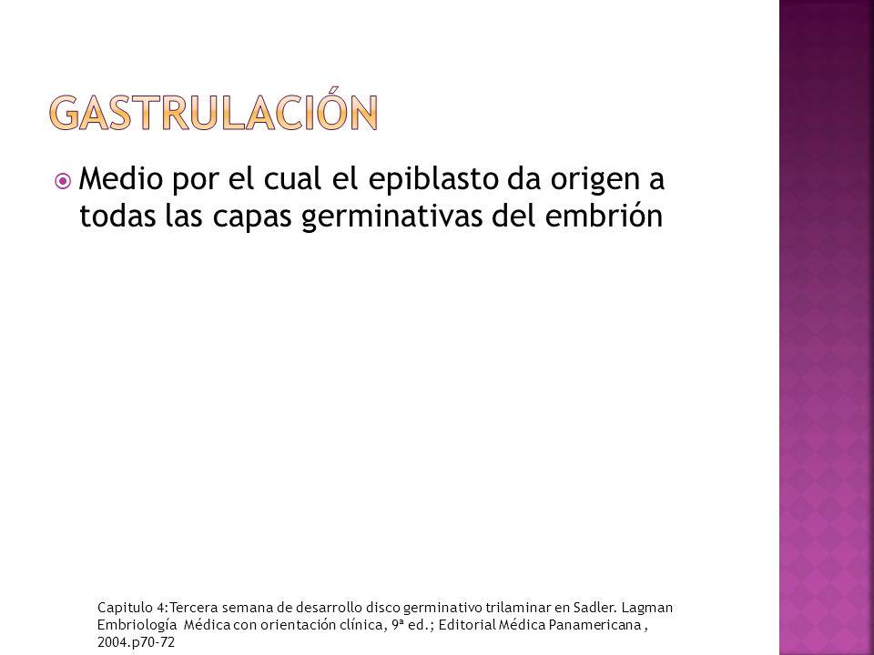 Medio por el cual el epiblasto da origen a todas las capas germinativas del embrión Capitulo 4:Tercera semana de desarrollo disco germinativo trilaminar en Sadler.