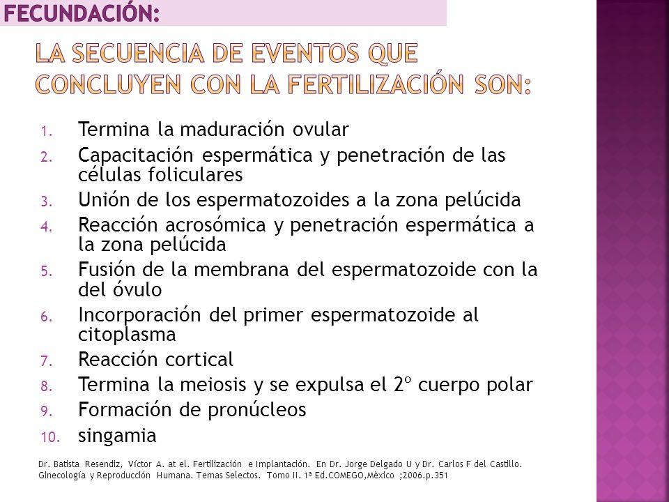 1. Termina la maduración ovular 2. Capacitación espermática y penetración de las células foliculares 3. Unión de los espermatozoides a la zona pelúcid