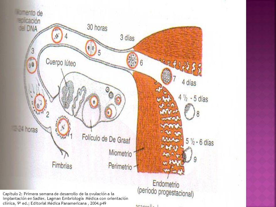 Folículo de Graff: folículo secundario de gran tamaño potencial para la ovulación Oovocito en 2ª división meiotica Metafase